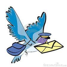 piccione viaggiatorejpg