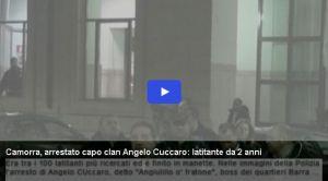 cuccaro-15x10arresto-1