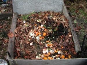 rifiuti-organici-1
