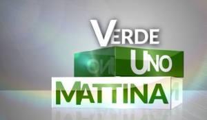 verde-uno-mattina-rai-1