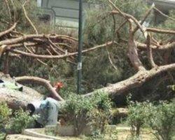 albero-ramo-caduto-1