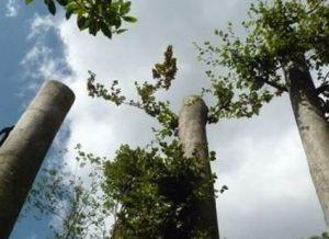 alberi-15x11-taglio-2