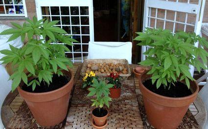marijuana-15x9_terrazzo-13